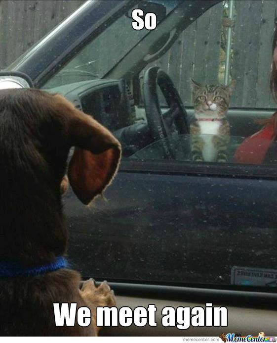 Cat Vs Dog Memes Which Are Too Funny Cute Funny Animals Funny