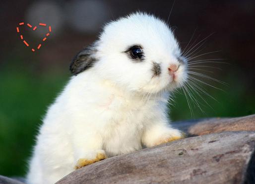 Super Cuteeee Konijntjeeee 3 3 3 3 Loveeee 可愛い 動物 かわいいウサギ 動物 かわいい