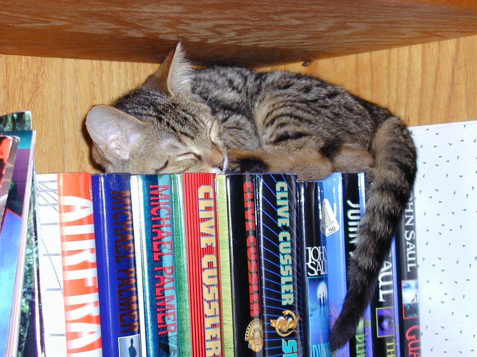 Books To Read Wallpaper Books Wallpaper Cat Books Cats Sleeping Kitten