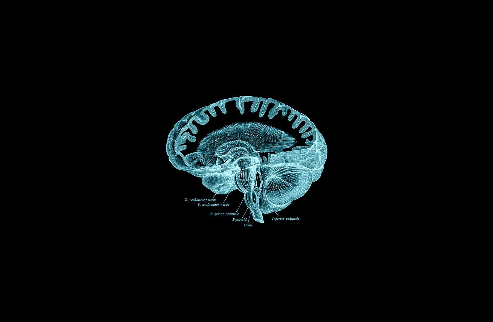 Brain Gray S Anatomy Book Anatomy Dark 720p Wallpaper Hdwallpaper Desktop Greys Anatomy Book Hd Wallpaper Wallpaper