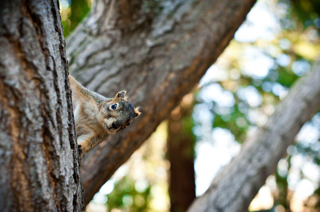 Squirrels are divas around here Animals, Squirrel, Panther