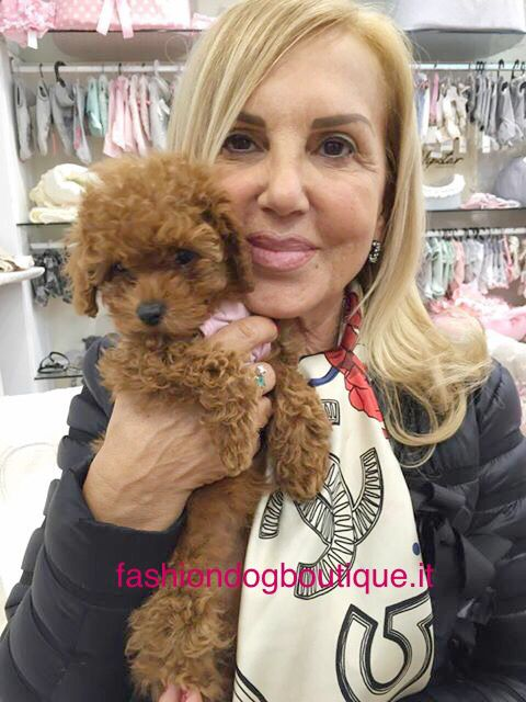 ❤️❤️️Good Night everybody from Cherie and her lovely mommy❤️❤️#fashion #fashiondogboutique #rivoli #cutie #cuccioli #chihuahua #clubchihuahua #chihuahuafashion #pets #pink #puppy #life #love #instadog #instalife #instalove #moda #night #goodnight #goodevening #kiss #style #sweetie #shopping #dogs #petlove