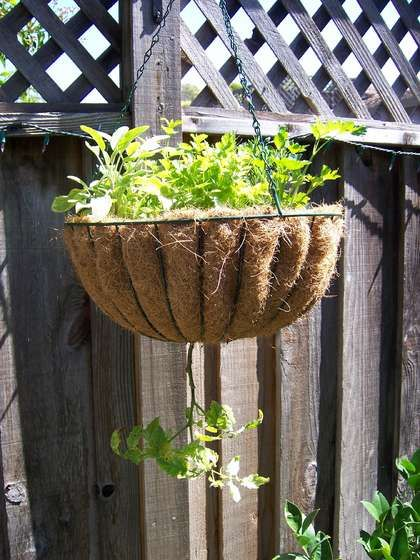 How To Plant Hanging Upsidedown Tomatoes Plants Tomato 400 x 300
