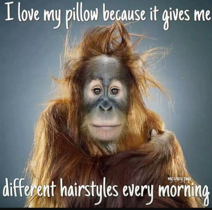 Pin By Evelien Kroon On Animal Humor Morning Quotes Funny Funny Animal Faces Funny Good Morning Memes