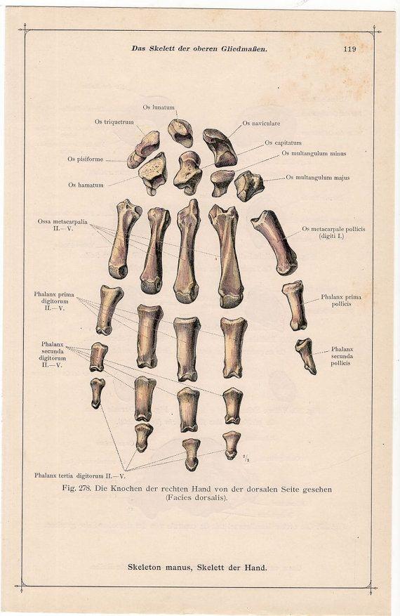 1897 BONES of a HAND print original antique skeleton medical anatomy ...