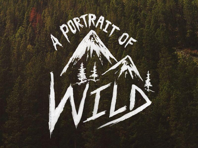 A Portrait of Wild by Sam Larson