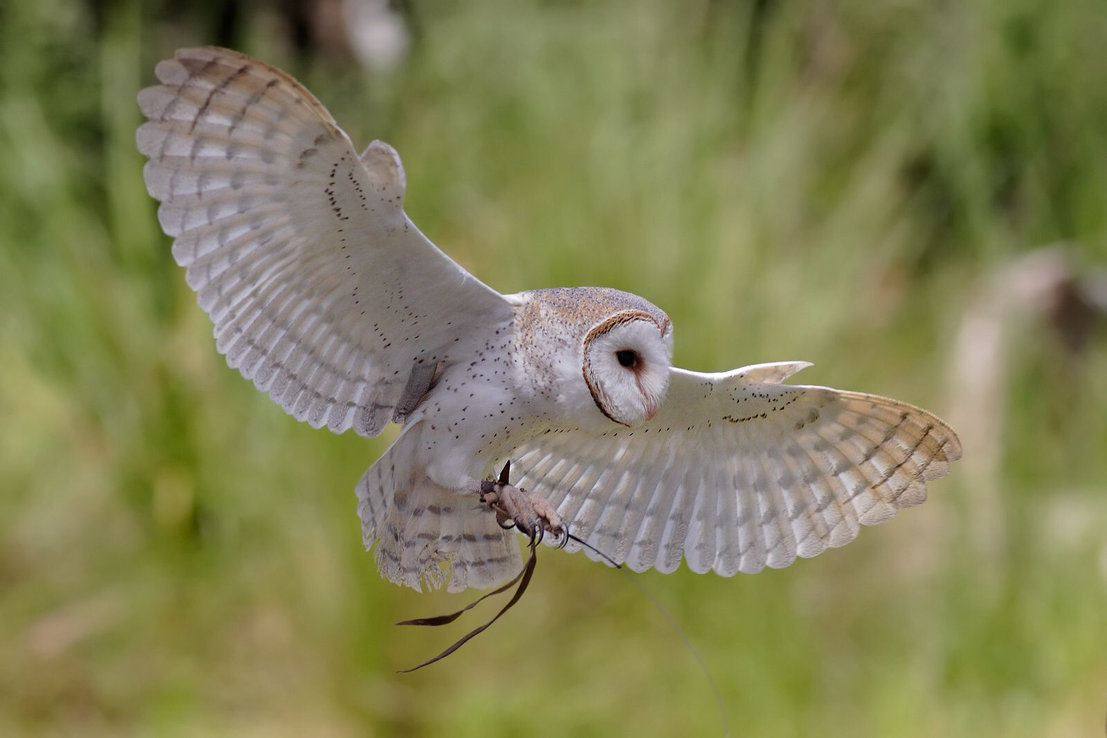 Pin by Jill Stewart on Birds Bird barn, Owl, Owl facts