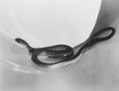 """jumblepusher: """" Imogen Cunningham. """"Snake in Bucket"""". 1929. USA. """""""