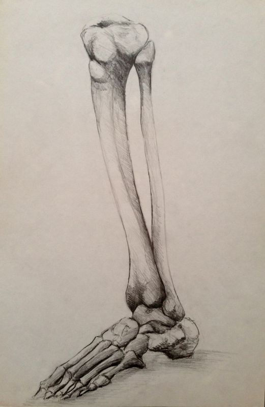 Anatomy 3 Leg Bones 2017 Pencil Drawing By Sasha Bone Drawing Skeleton Drawings Anatomy Art