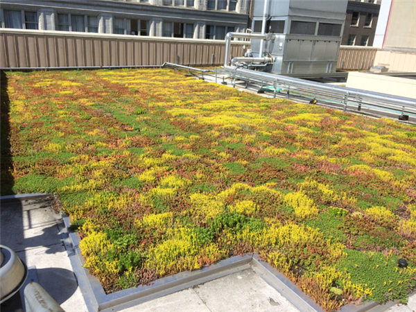 Mead Building Portland Oregon Plug And Play Superlightweight Green Roof Green Living Technologies Home Green Roof System Rooftop Green
