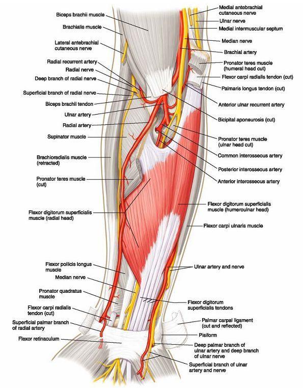 ovid lippincott williams  u0026 wilkins atlas of anatomy sdp