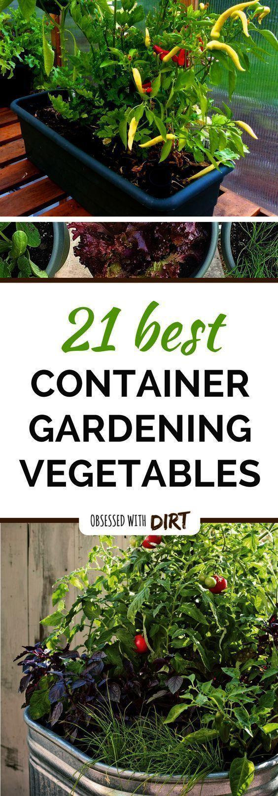 43957c8318daadb58beec50aaf2cdd62 - Gardening All In One For Dummies Pdf