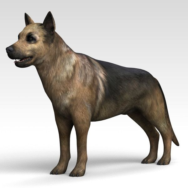 3d Animated Dog - Google Search