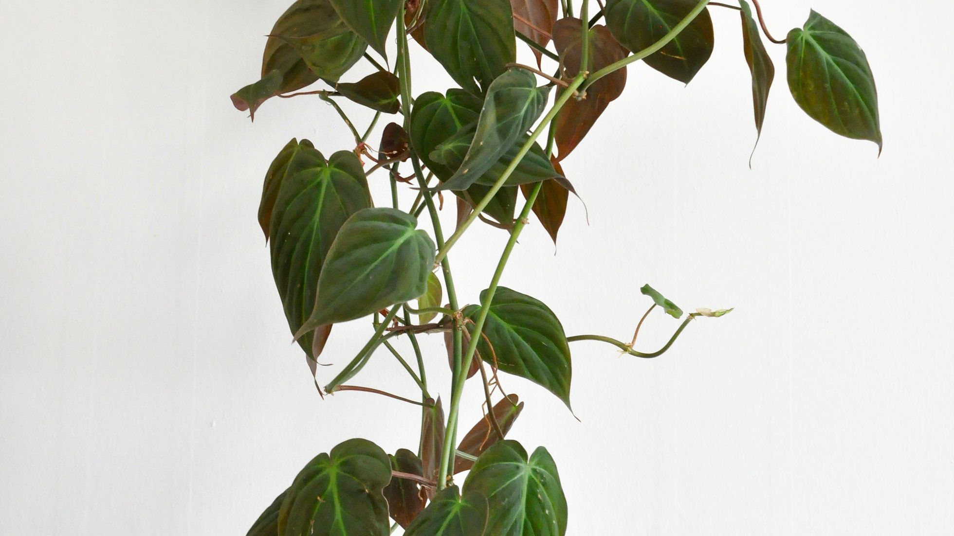 Plant Purchase Online