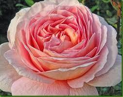 Resultado de imagem para florzinhas brancas pequenas e muito perfumadas