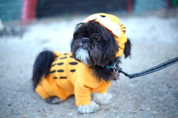 Pet Costume Alterations Pet Costumes Dog Clothes Patterns Pets