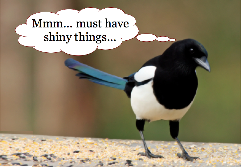 Image result for magpie with shiny object