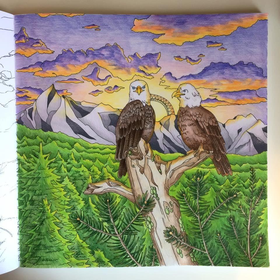 Eagles By Jenny Kafka