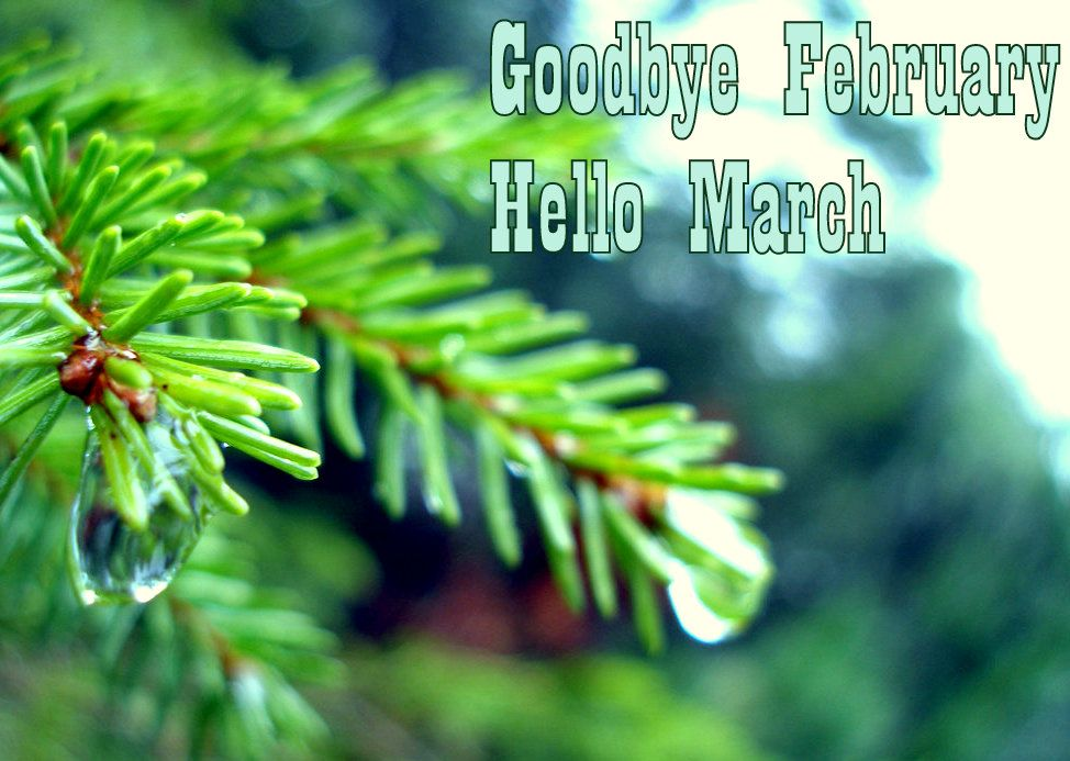 Best Collection Of Goodbye February Hello March Pictures, Images, Photos  And Wallpapers. Hello
