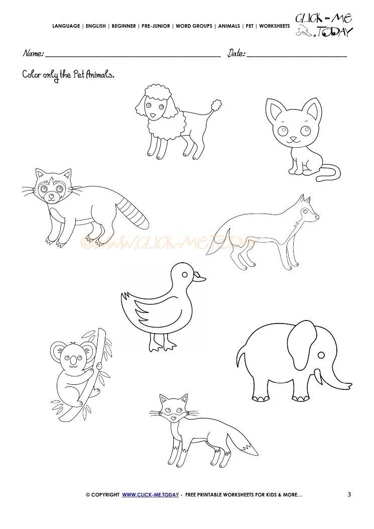Pet Animals Worksheet Activity