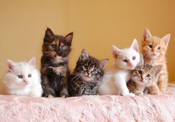 Cute Litter Of Foster Kittens From Itty Bitty Kitty Committee