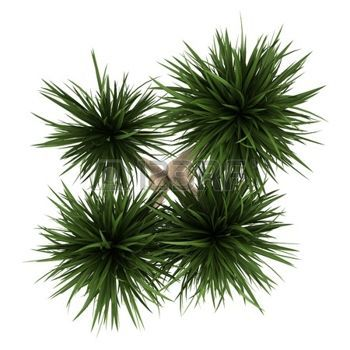Plants Top View Stock Photos Pictures Royalty Free Plants Top View Images And Stock Photography Trees Top View Potted Trees Tree Plan