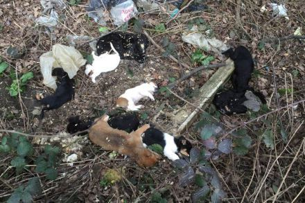 The Crufts Effect Dead Puppies Dumped Like Rubbish In A Ditch