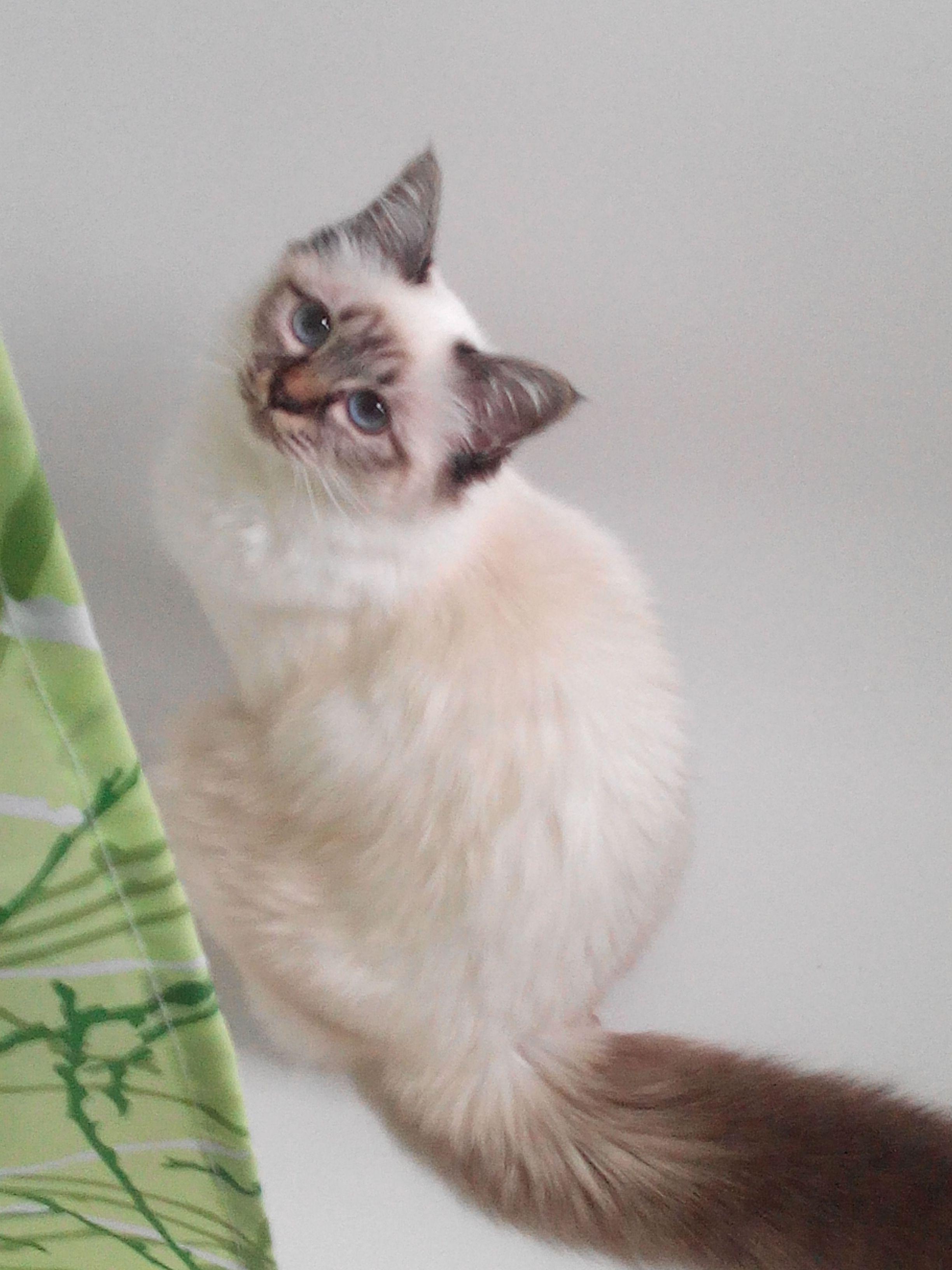 Galilée Katze | Pawshake