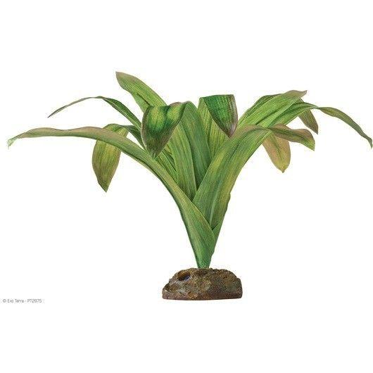 Planta Bromelia Smart Plant Exoterra Plants Terrarium Plants Bromeliads