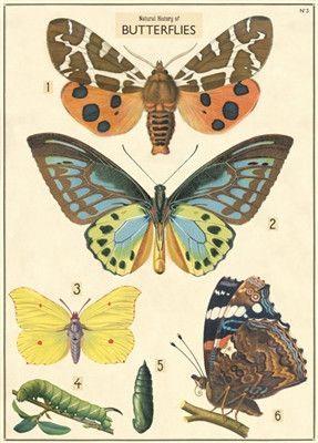 Decorative Wrap 20X28 Nat History Butterflies