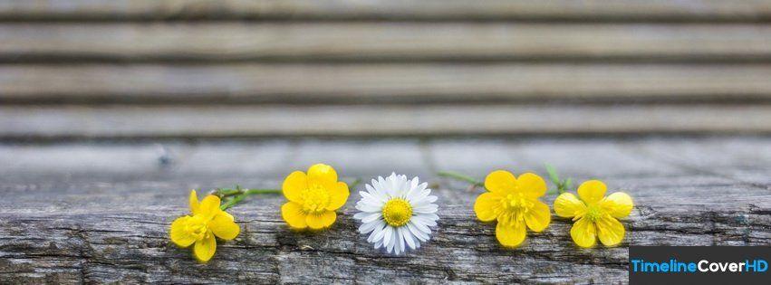 Cute Flowers Timeline Cover 850x315 Facebook Cover Capa Facebook Imagens Fofas Fotos Da Capa