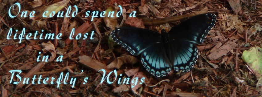   Beautiful Butterfly Facebook Timeline Cover ~ Hindi Sms, Good Morning ...