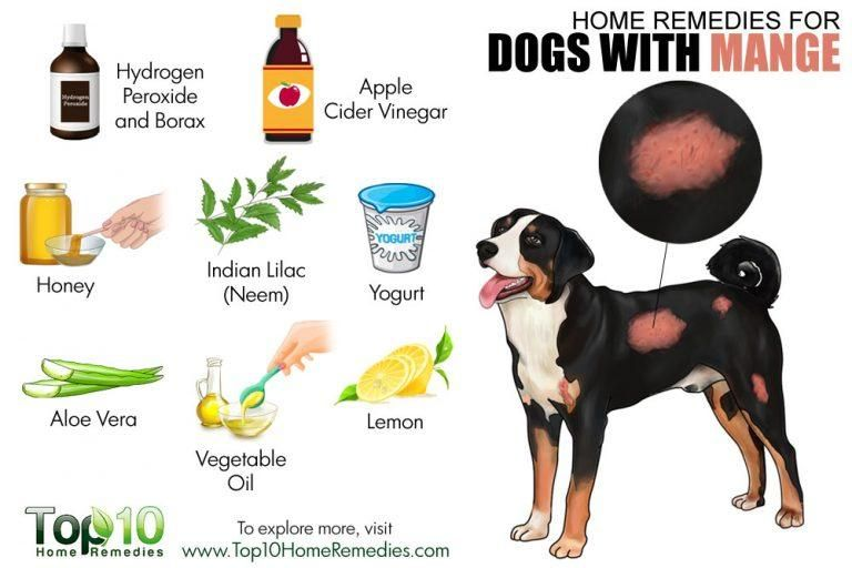 Home Remedies For Dogs With Mange Dog Mange Pet Remedies Dog