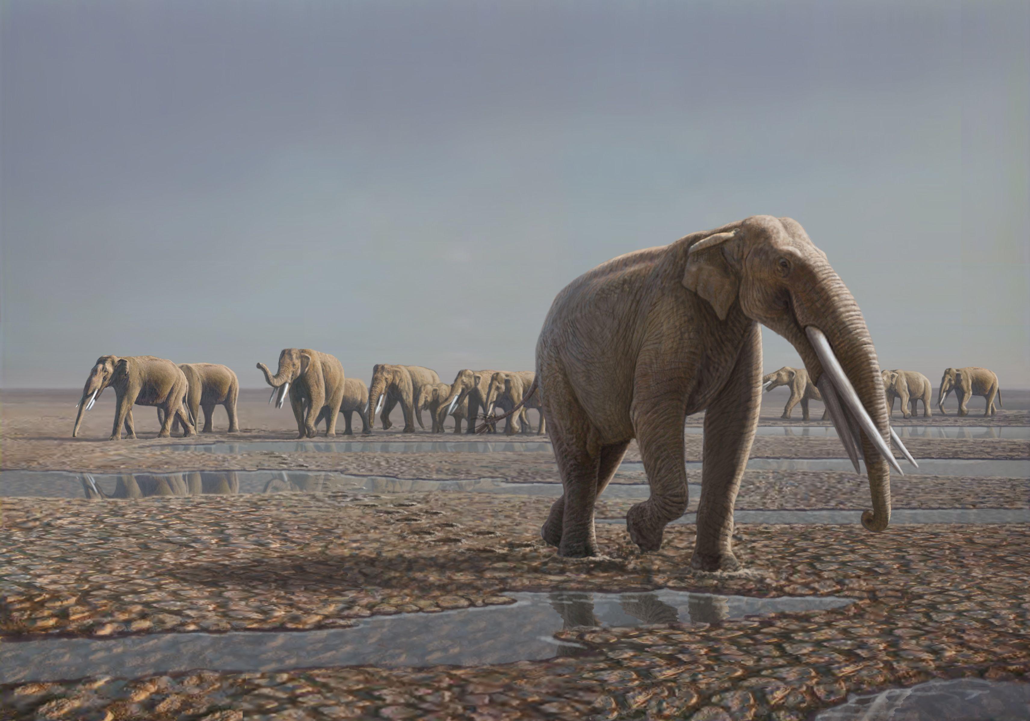 Mammals of the Miocene Era, Artwork Photographic Print by Mauricio ...