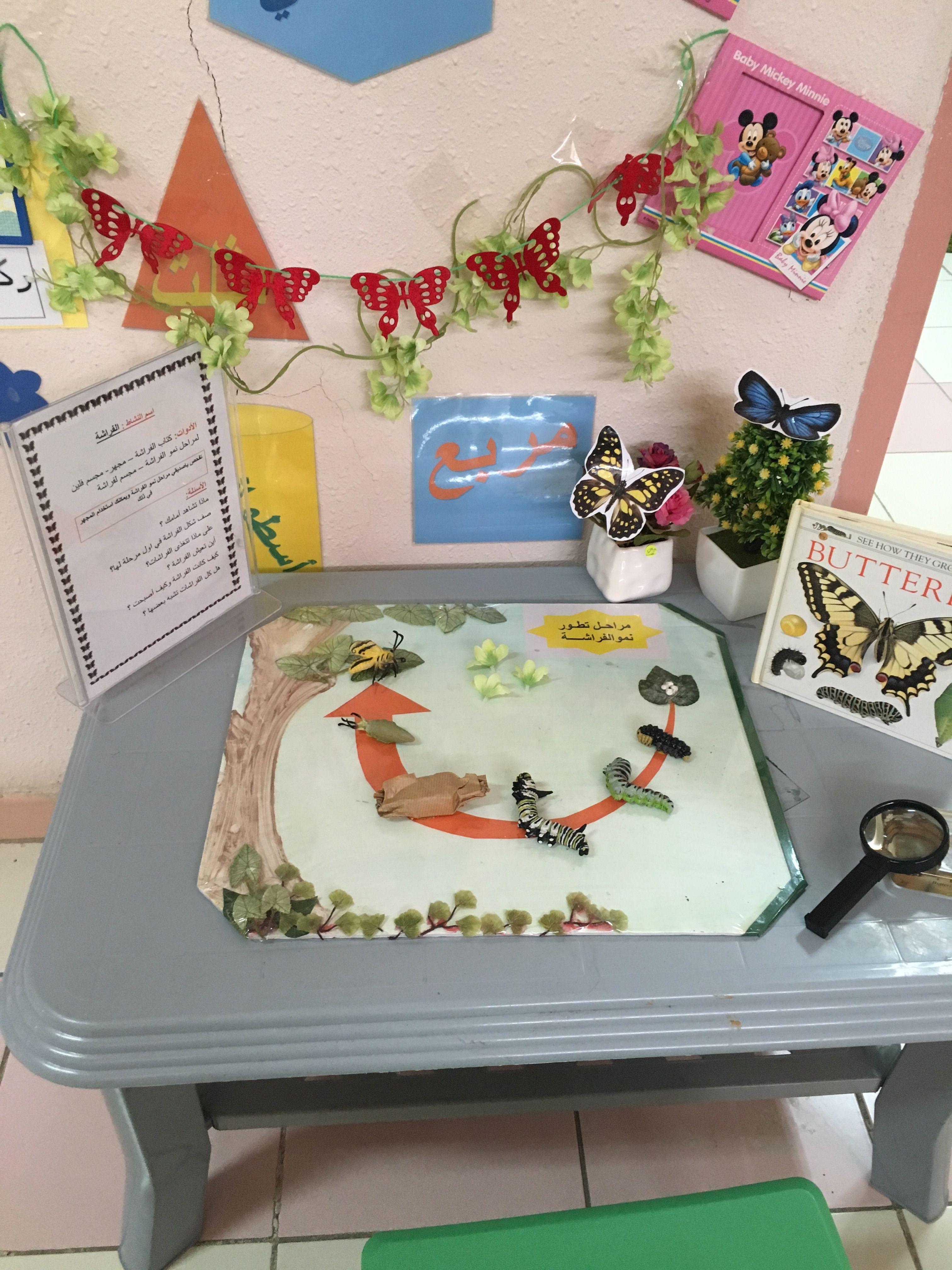 وحدة الحشرات دوره حياة الفراشه Dolls Clothes Diy Kids And Parenting Butterfly Life Cycle