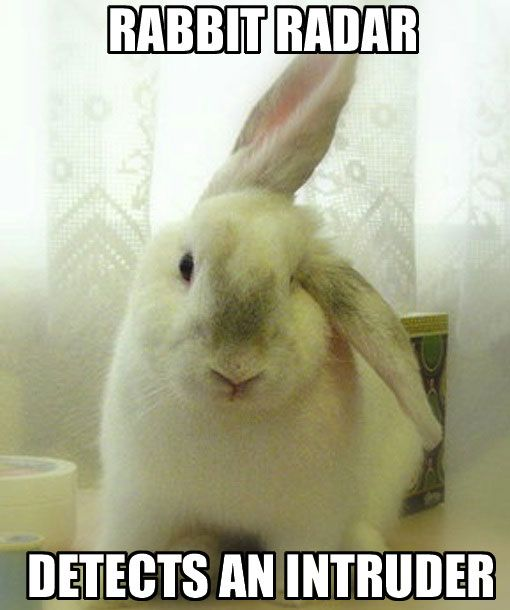 Who S Cutest Rabbits Celebrate Bugs Bunny S Birthday Rabbit Bunny Meme Bunny Pictures