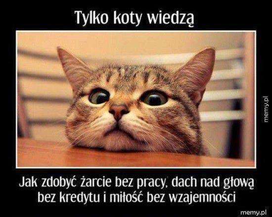 Pin By Malgorzata Ch On Cytaty Sentencje Mysli Kittens Cutest Funny Animals Cats