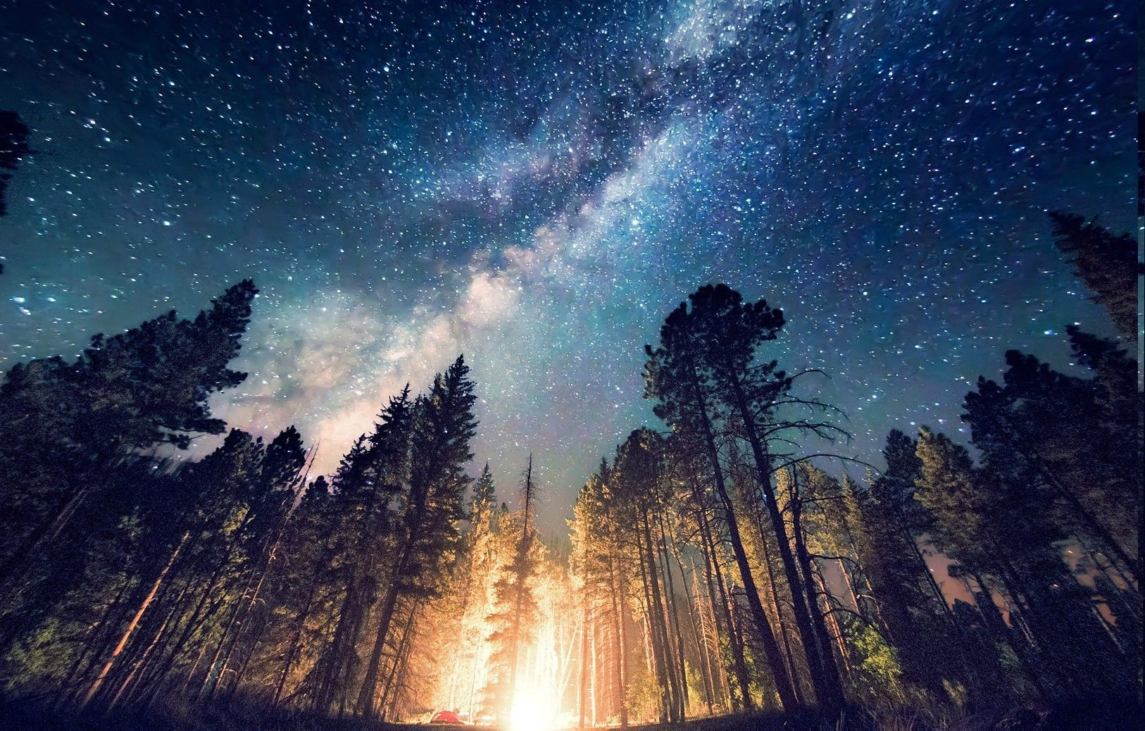 Forest Camping Starry Night Trees Milky Way Long Exposure Landscape Sky Full Of Stars Scenery
