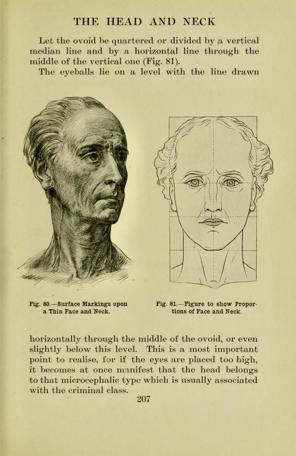 Surface markings upon a thin face and neck, from \'Human anatomy for ...