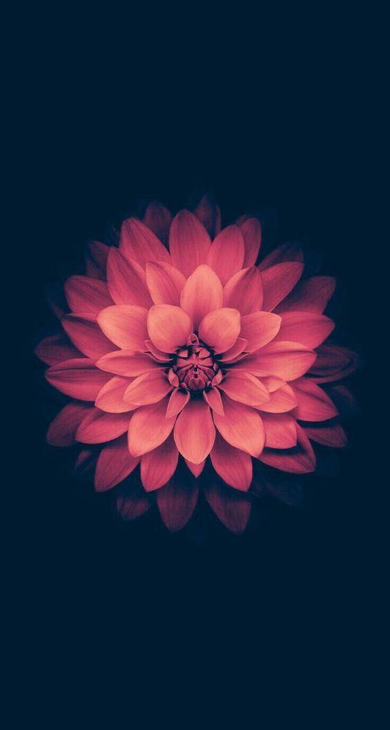 Il colore e' poesia dell'anima: Photo