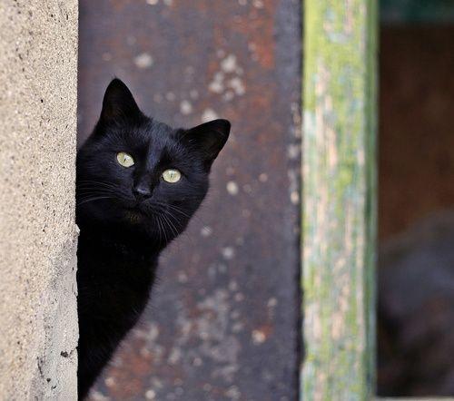 Gatos Negros M