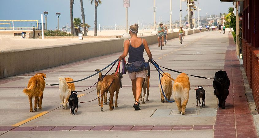 How to find the right dog walker Dog walking, Dog