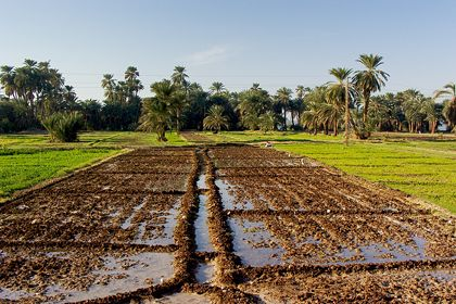 This Agricultural Program Is Very Ideal For Those Seeking For Information About Egyptian Agricultural Products Plants Roses Egypt Tours Egypt Nile