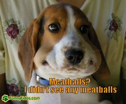 Beagle Looking Guilty Beagle Funny Funny Dog Pictures Funny Dogs