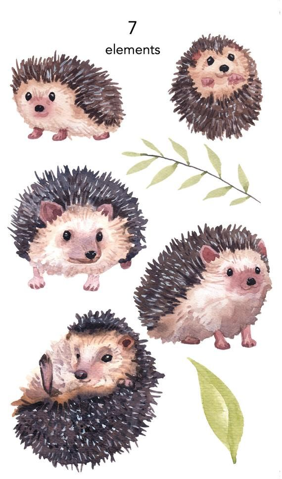 WATERCOLOR CLIPART, hedgehog clipart, watercolour