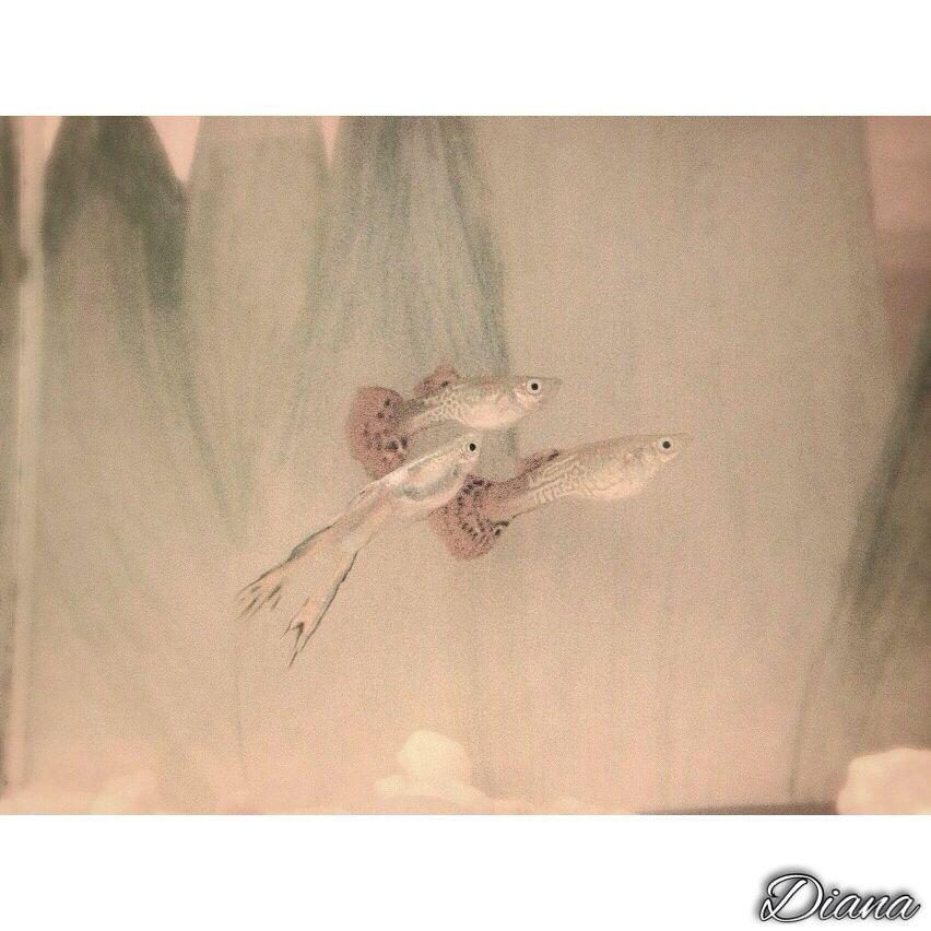 Mijn vissen ☺️