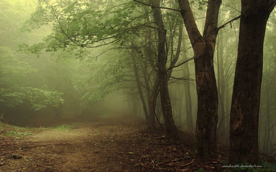 Scary Forest Google Search Hoia Baciu Jpg 900x563 Wallpaper Ghost Creepy Picturesque Outskirts