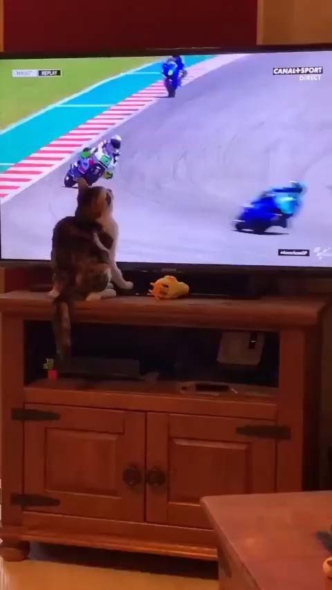 Photo of Ce chat est un véritable Jedi