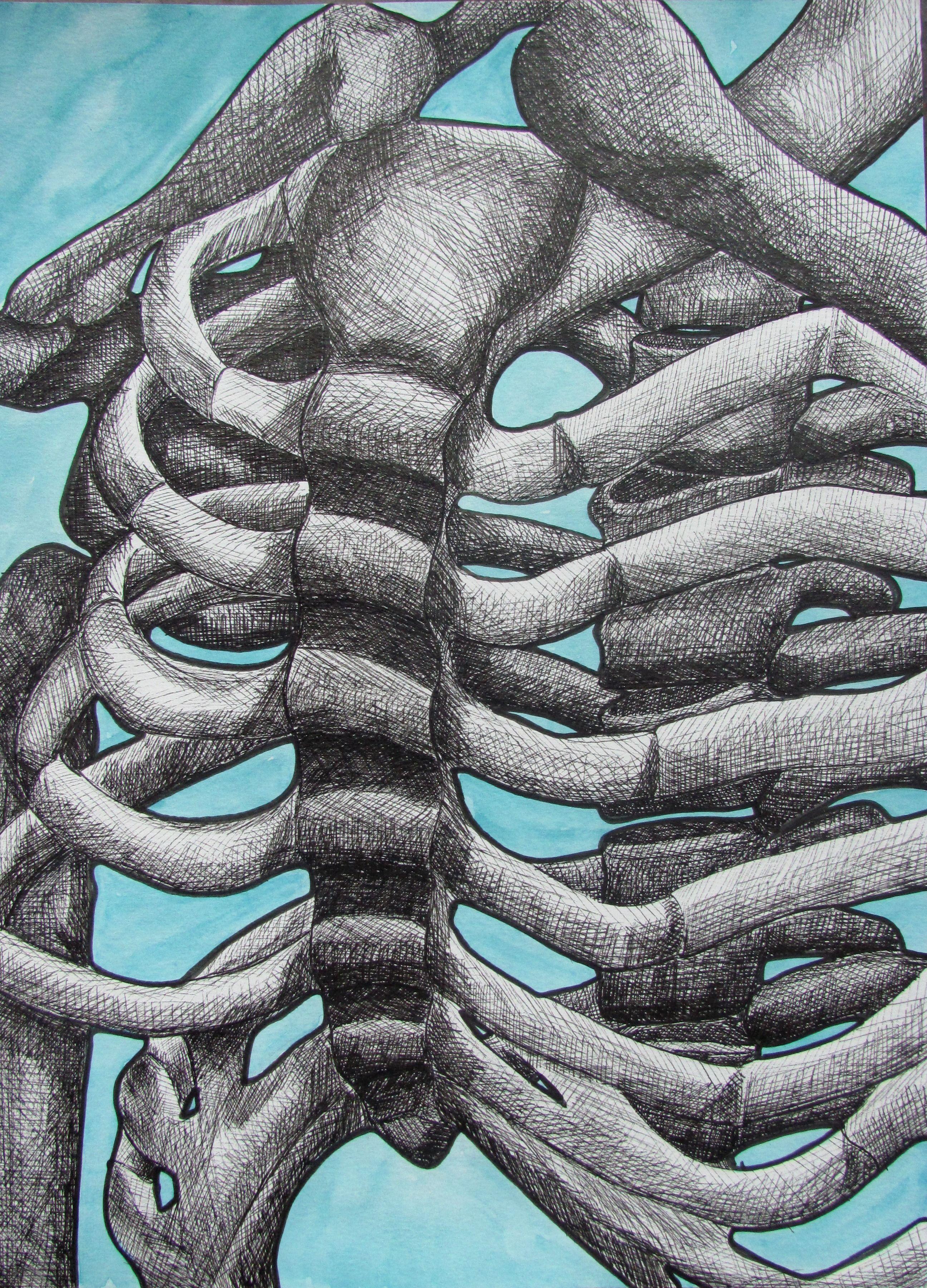 Cross Hatch Skeletal Study W Watercolor Background