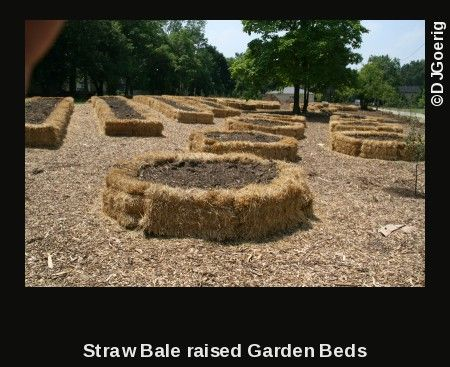 Straw hay bales are the best way to make a raised bed on for Cheapest way to make raised beds